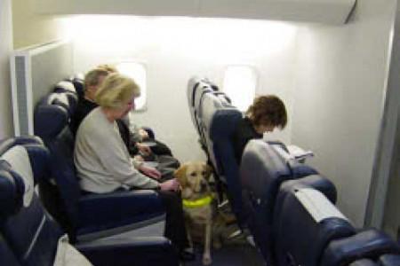 Cães guia em aviões – treinamento de emergência