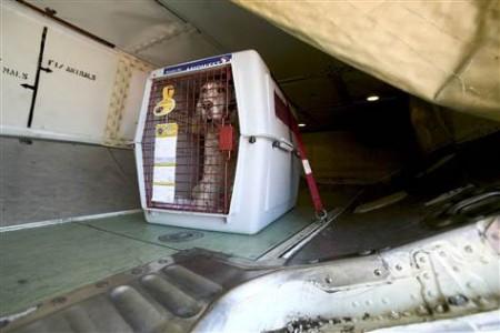 Meu animal de estimação fica confortável quando voa no porão do avião?