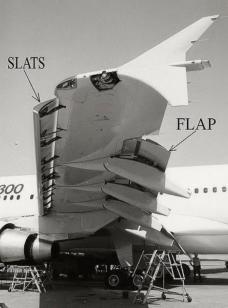 444px-wingslat600pix